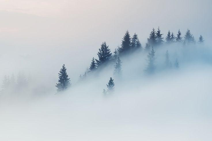 Tåge og gråvejr er måske ikke det mest inspirerende fotovejr, men det bør det måske være. Her får du 3 tips til at fange tågen.