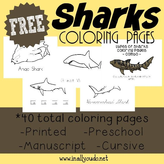 Enjoy Shark Week just a little more with these fun Types of Sharks Coloring Pages & Emergent Readers. Great for Toddlers - 5th Grade!! :: inallyoudo.net