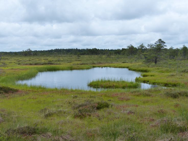 Rabivere Bog, typical habitat.