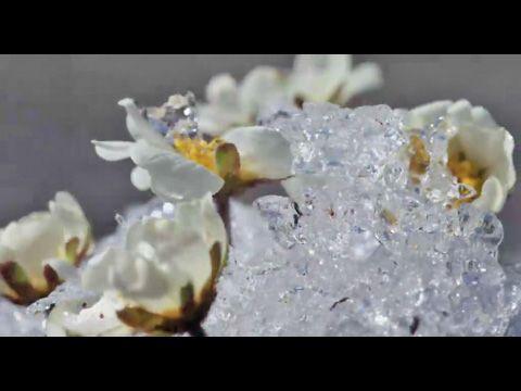 Créatures du froid (DVD) Cote BLP : VE600-AMO-C (2011) éditeur : http://videotheque.cnrs.fr/index.php?urlaction=doc&id_doc=2849&rang=1