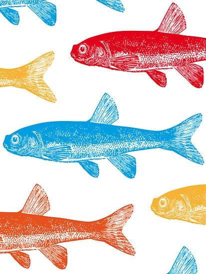 Colourful Fish Card & Prints I M  Bianchi