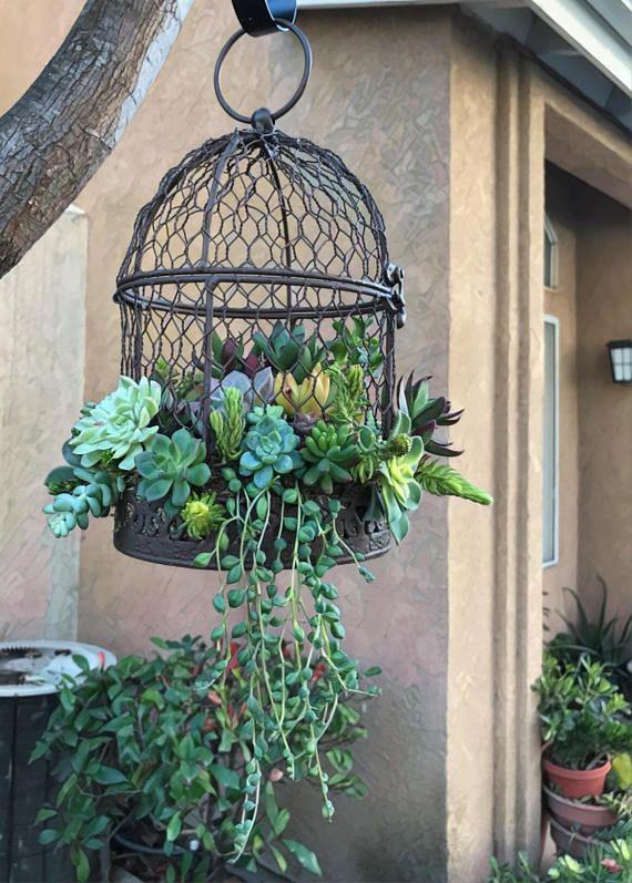Best 25 Birdcage Planter Ideas On Pinterest Cava