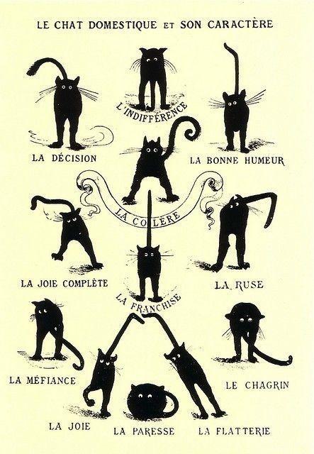 Le chat domestique et son caractère.