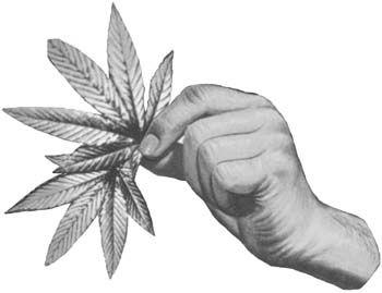 In weed we trust. And hemp too. #stoner #art #drawing #weed #marijuana #cannabis #hemp #leaf #pencilart #blackandwhite