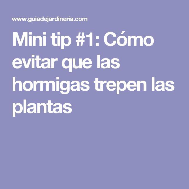 Mini tip #1: Cómo evitar que las hormigas trepen las plantas