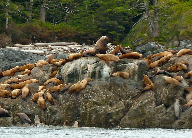 Greywolf's Chronicles: Prince of Wales Island to Wrangell