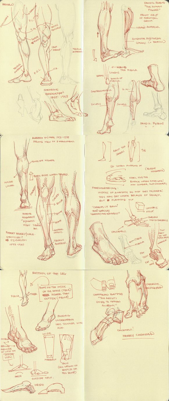 anatomy dump 2 by ~kakimari on deviantART ✤ || CHARACTER DESIGN REFERENCES | Find more at https://www.facebook.com/CharacterDesignReferences if you're looking for: #line #art #character #design #model #sheet #illustration #expressions #best #concept #animation #drawing #archive #library #reference #anatomy #traditional #draw #development #artist #pose #settei #gestures #how #to #tutorial #conceptart #modelsheet #cartoon
