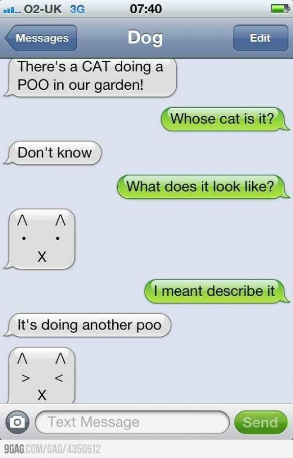 Just look at the cat's face when doing another poo! LOL!