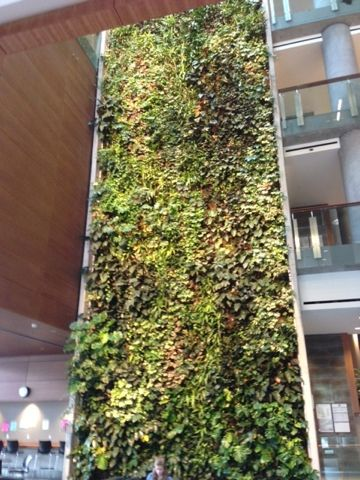 See the second largest 'Living Wall' in the Social Science building at the University of #Ottawa #WordlessWednesday. @DownshiftingPRO blog
