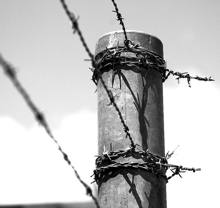 149 best Barbed Wire images on Pinterest   Res life, Barbed wire and ...