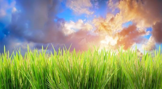 Gras op een mooie zomerdag