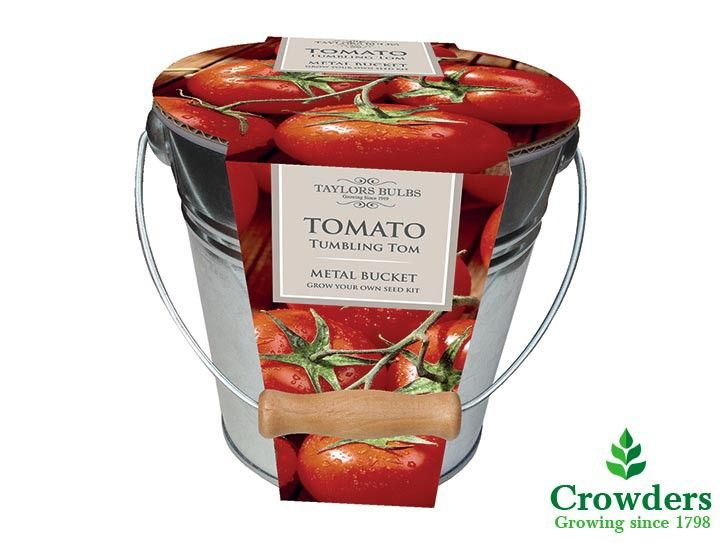 Grow your own delicious tomatoes easily and without any fuss with Taylors Bulbs Tomato Kitchen Garden Planters. The attractive metal bucket features a rustic wooden handle and contains compost, instructions and Tumbling Tom tomato seeds. Tumbling Tom is a great variety and an abundant cropper which will reward you with sweet and juicy cherry tomatoes. This is a compact bush variety with a trailing habit.