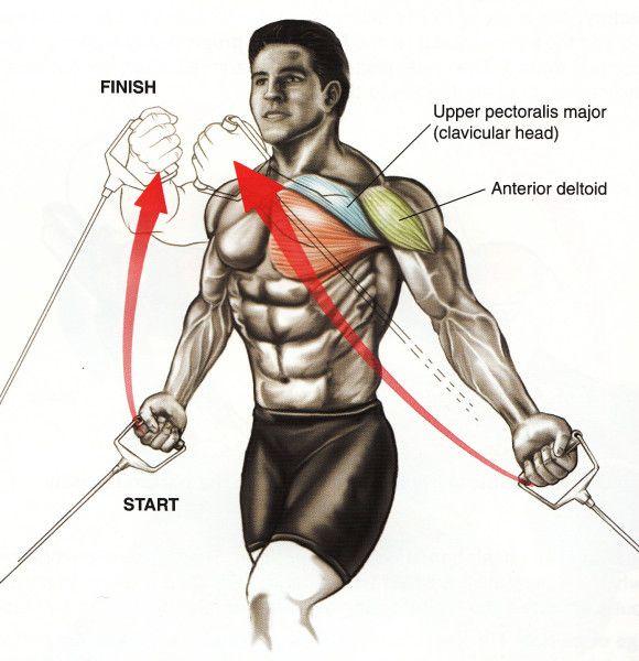 Anatomy Of Body building