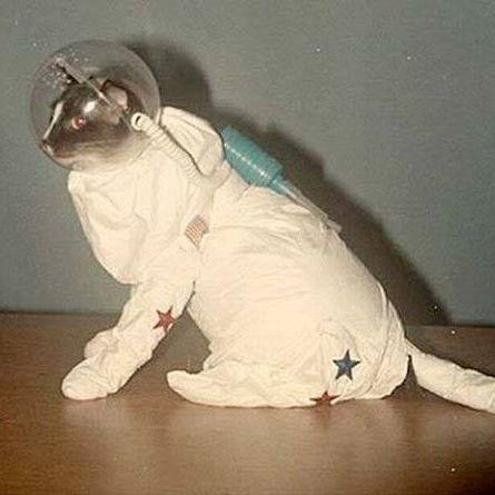 #Gatto cosmonauta il venerdì sera, cosa si potrebbe desiderare di più?