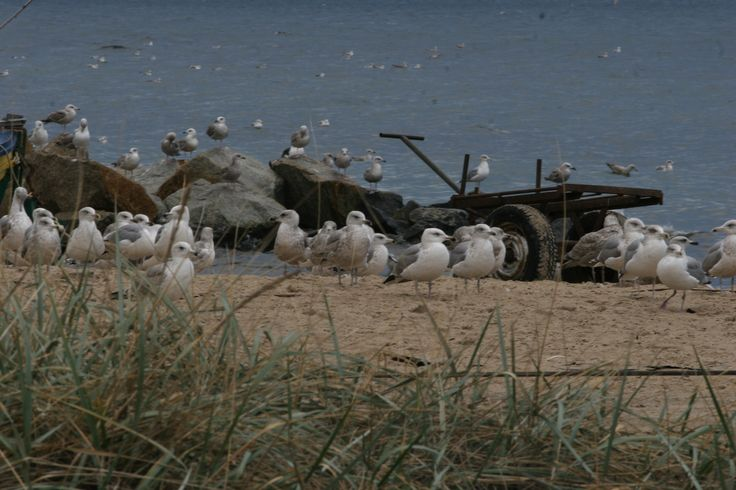 we're getting ready for war - gulls
