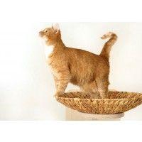 Katzenmöbel, kratzbäume, katzen liegefläche, kratzmöbel, catwalk, catwalksystem, katzen zubehör, stabil, sicher  - Goldtatze