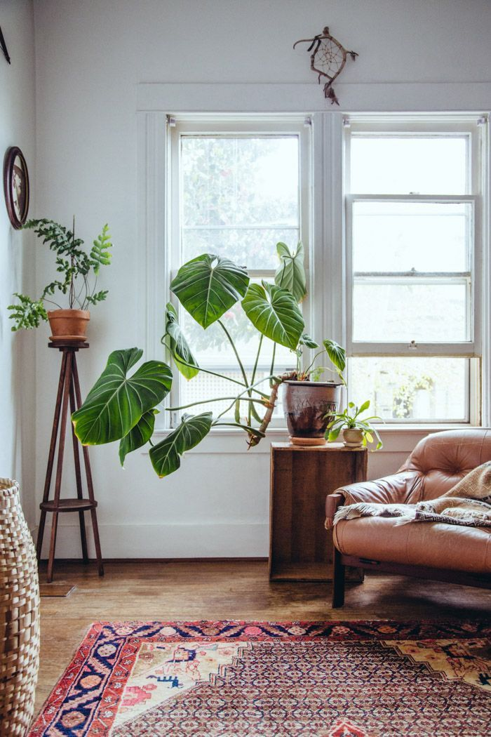 Modern plant stand, easy/cheap side table, philodendrons are a great choice (I have a few of them inside), the rug is nice, too, depending which way we go.