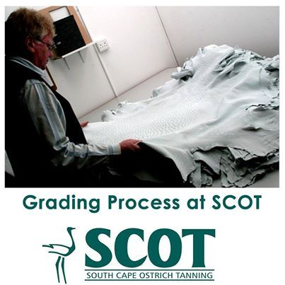A grading standard for finished and crust ostrich leather will reflect its cutting value, which in turn will determine the monetary value of each individual skin, read more here: http://on.fb.me/1emet2B