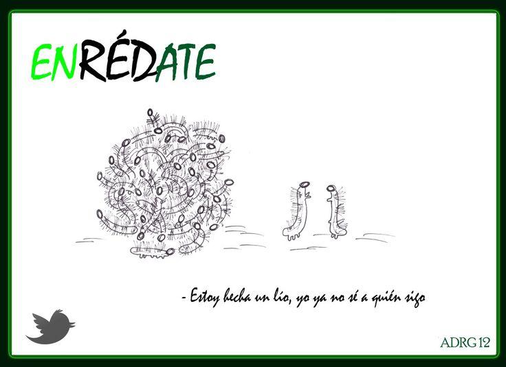 UN AMBIENTALISTA: Humor En RED