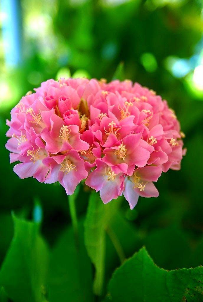 Beautiful flowers : Photo                                                       …