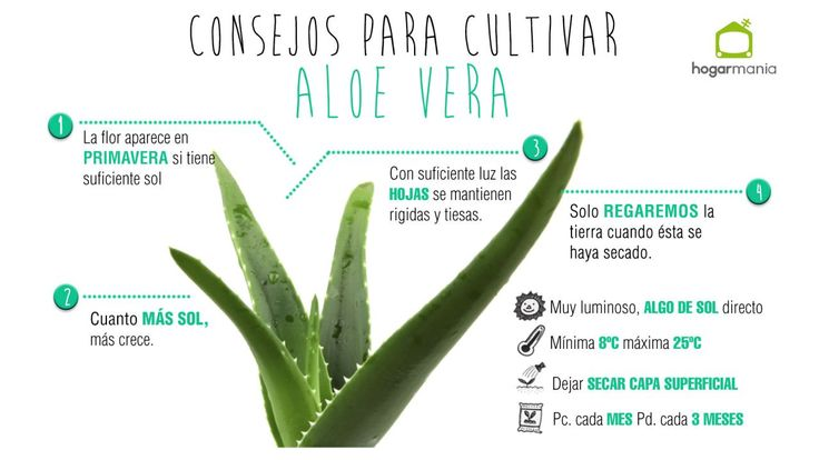 Cultivar aloe vera
