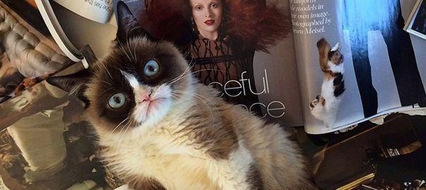 Comment Grumpy Cat est devenu le chat le plus célèbre d'Internet