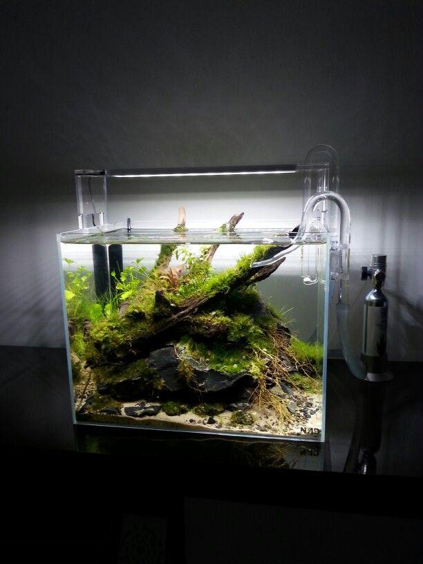 Nano scape Aquarium Pinterest