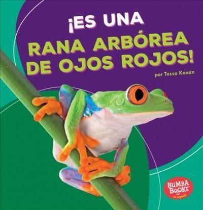 Es una rana arborea de ojos rojos / It's a Red-Eyed Tree Frog