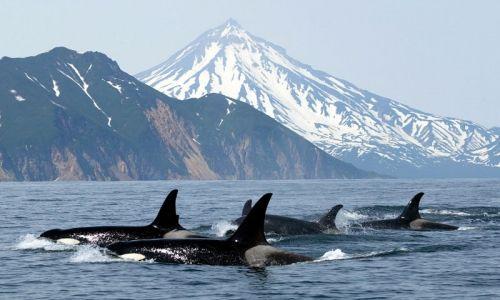 Whale Watching - San Juan Islands, Washington
