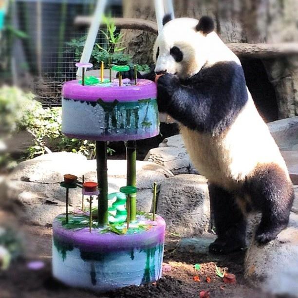 Yun Zi celebrating his 3rd birthday at the San Diego Zoo. Adorable cake!: San Diego, 3Rd Birthday, Travel, Photo, Adorable Cake