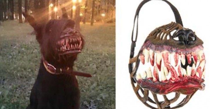 Focinheira assustadora para passear com seu cão à noite