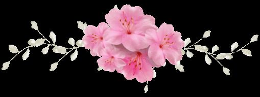 d fiore