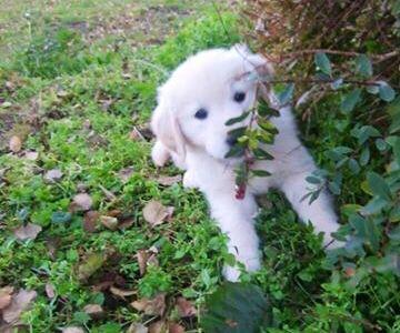Love my Golden puppy ❤️
