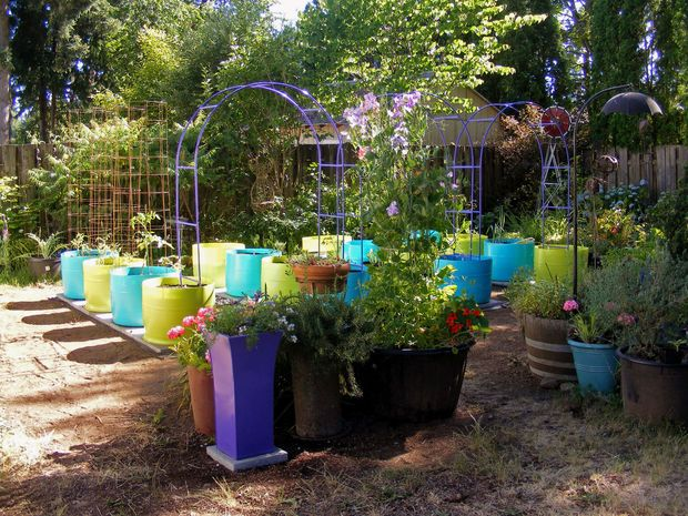 The 55 Gallon Drum Garden: We Have The Drums, Now What Do We Do