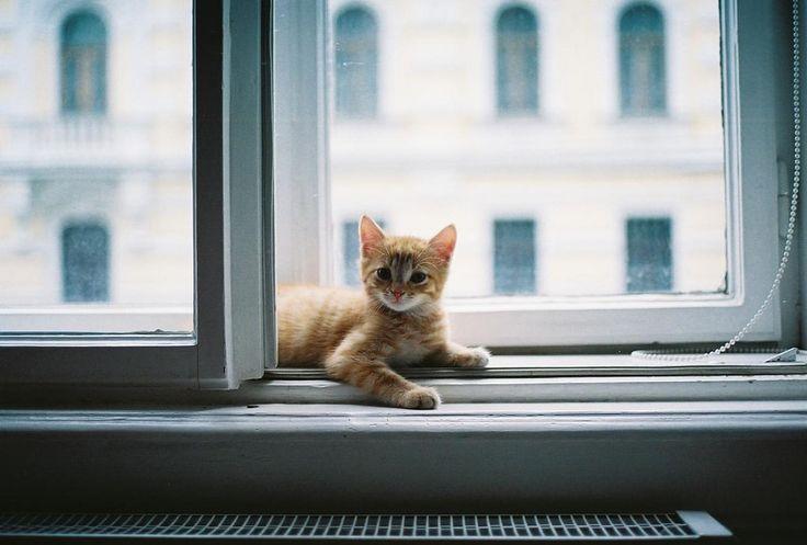 рыжий котенок в окне