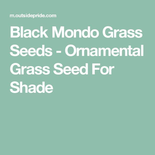 Black Mondo Grass Seeds - Ornamental Grass Seed For Shade