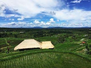 バリ倶楽部さすけのブログ: 一度は行くべき!バリ島の美しいライステラス5選。