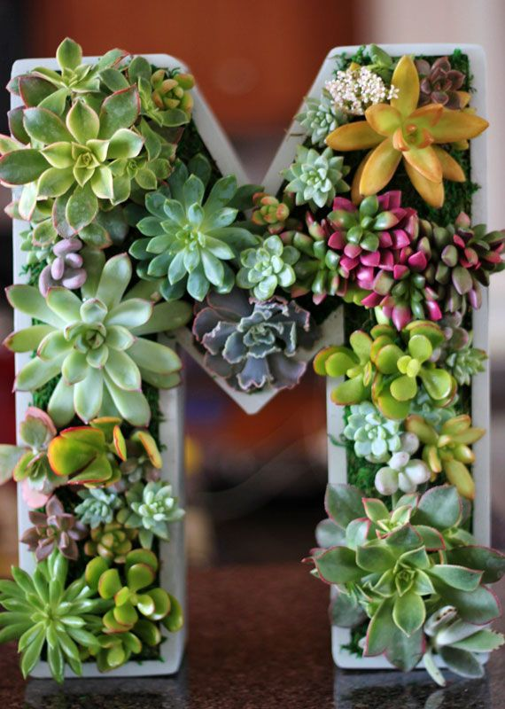 Sustainable art in the form of Arrangements, topiaries, wreaths, and wall hangings using succulent plants.  etsyfeaturedshop-rootedinsucculents-plants-009