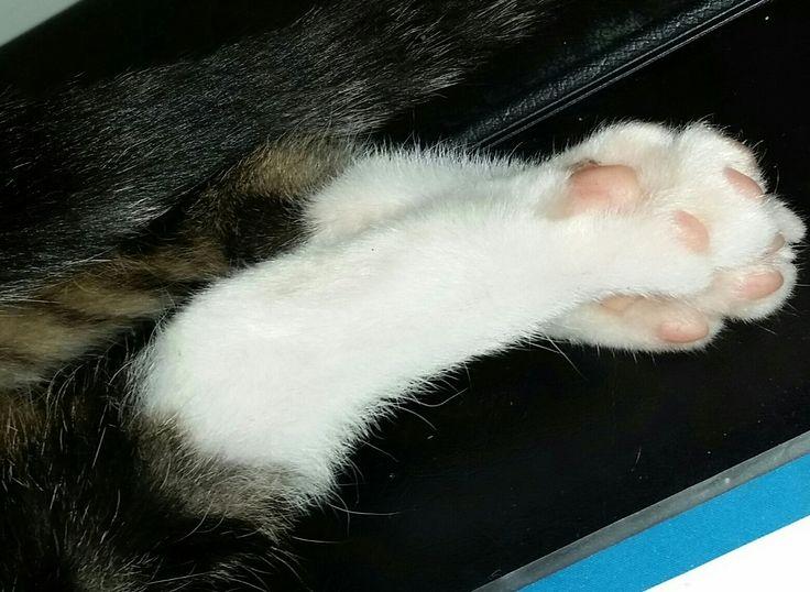Cuteness summed up in two little feets :-)
