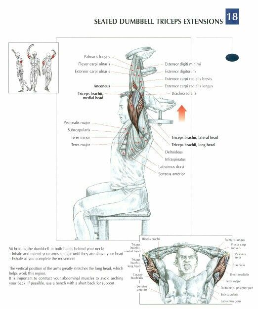 Seated Dumbbell Triceps Extensions ♦ #health #fitness #exercises #diagrams…