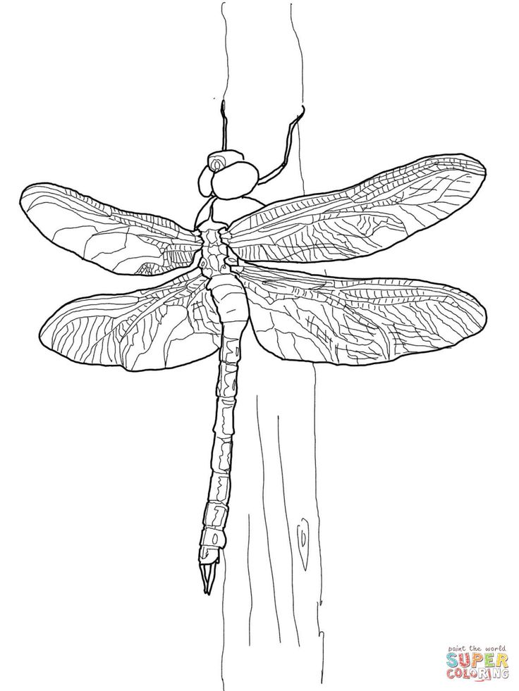 86 best Insects - art images on Pinterest | School, Animales and Art ...