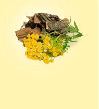Kláštorný čaj proti parazitom | Kúpiť so zľavou 50%