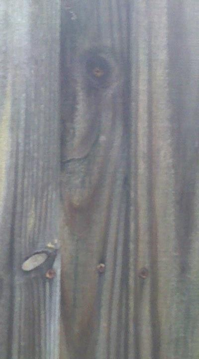 Walked outside and saw this face in my fence! Creepy things eye follows me lol