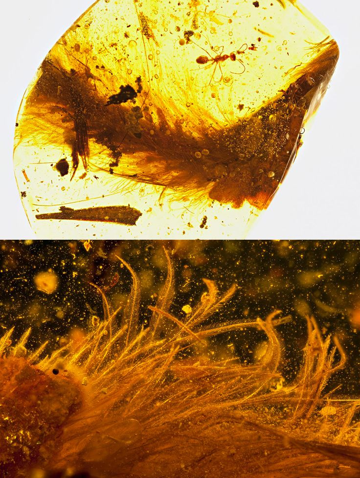The First Dinosaur Tail Found Preserved in Amber is Covered in Feathers
