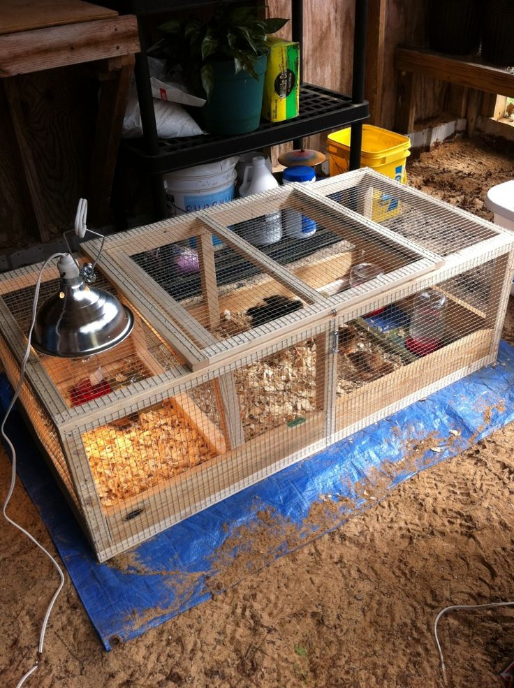 brooder box for chicks A great idea. One for each of my kids, who will be raising their own chicks and different breeds this spring/summer.