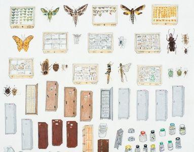 Elise Engler Galapagos Drawings. Invertebrate Lab, Charles Darwiin  Foundation
