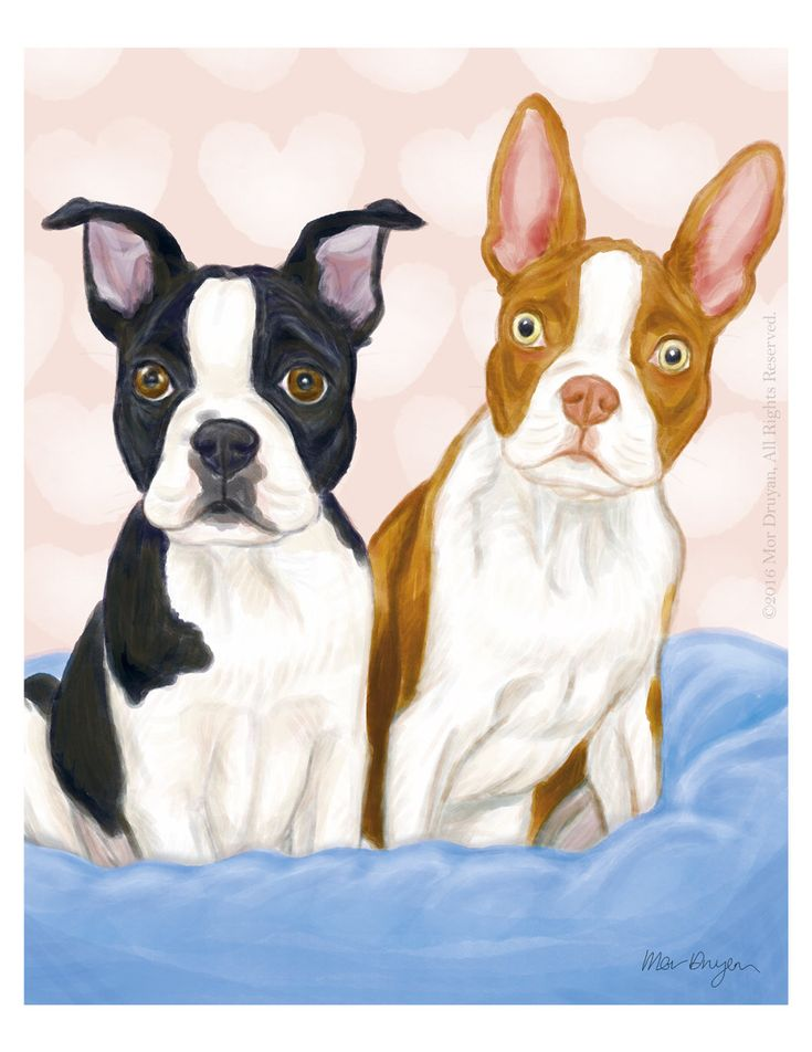 How cute is this couple?  For more details visit my #etsy shop: Boston Terrier Cute Puppies Art Print of Original Painting-8x10-Dog Drawing #PetPortrait #NurseryDecor #BostonTerrierGifts #WallDecor #artprint #gicleeprint #Bostonterrier #dogdrawing #colorfulprint #watercolor #kidsroomdecor #artprint #adorable  http://etsy.me/2Fkd8xk