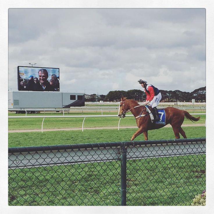 Gingerboy #winner #darrenweir #gingerboy #johnallen #races #horseracing #thoroughbred #chestnut #jumps #warrnambool #warrnamboolracingclub #track #allroadsleadtothebool by adodgy