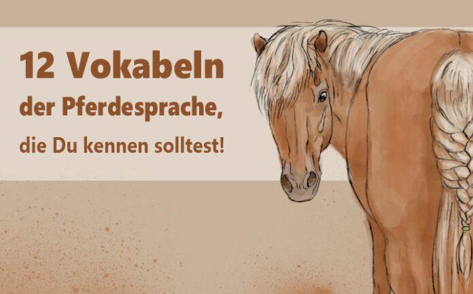 vokabeln pferdesprache