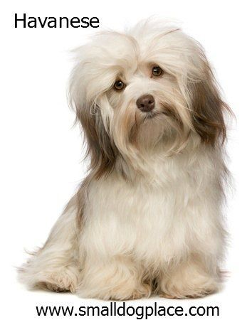 Dogs Good With Children Kid Friendly Dog Breeds Pinterest Dogs
